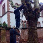 Der Nistkasten wird vom Baum geholt